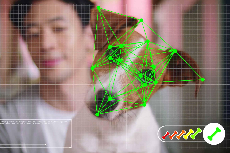 Pet-Commerce เว็บขายของสัตว์เลี้ยงออนไลน์ที่รู้ใจสุนัขว่าอยากได้ของชิ้นไหนด้วย AI