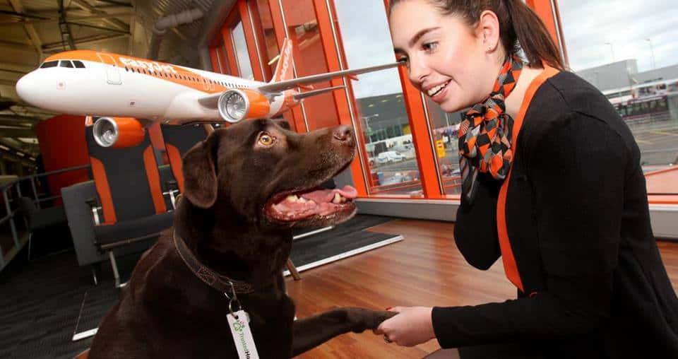 easyJet ให้การเดินทางอย่างสบายใจไม่ต้องห่วงสัตว์เลี้ยง
