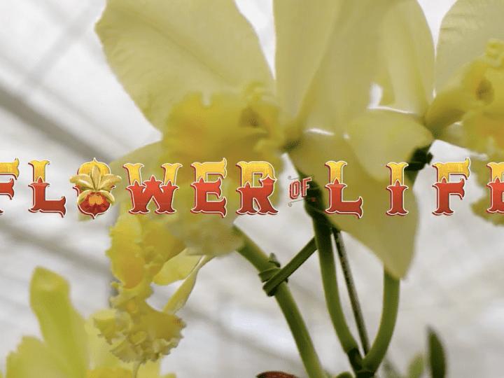 The Flower of Life กับแคมเปญที่เข้าถึงกลุ่มเป้าหมายได้ทุกวัน